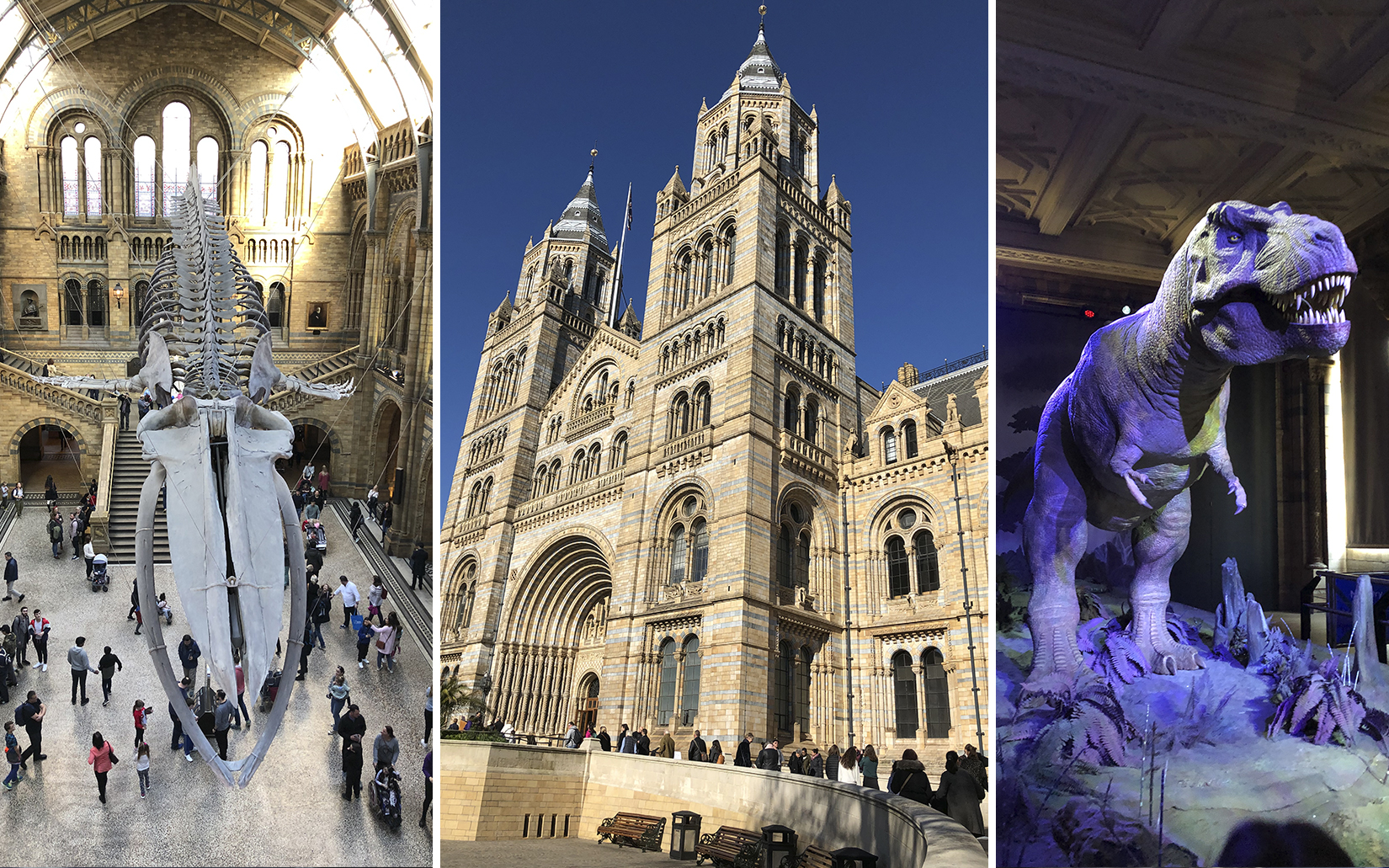 harry_potter_natural_history_museum